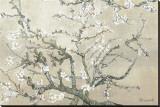 Mandelgrenar i blom, San Remy, ca 1890 (barkbrun) Sträckt Canvastryck av Vincent van Gogh