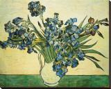 Vase of Irises, c.1890 Stretched Canvas Print by Vincent van Gogh