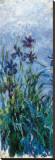 Iris Mauve (detail) Stretched Canvas Print by Claude Monet