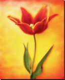 Tulip I Stretched Canvas Print by Christine Zalewski