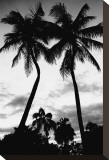 Palm Tree Silhouettes, Naples, Florida Stretched Canvas Print