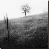 Tree and Fence I Stretched Canvas Print by Shane Settle
