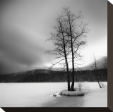 Lake of Woods Tree I Stretched Canvas Print by Shane Settle