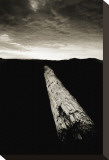 Dead Log at Floras Lake Stretched Canvas Print by Shane Settle