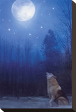 Lone Wolf Stretched Canvas Print by Stephanie Laird