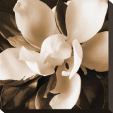 Magnolia Close Up I Stretched Canvas Print by Christine Zalewski