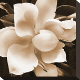 Magnolia Close Up II Stretched Canvas Print by Christine Zalewski