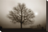Lone Tree Sepia Stretched Canvas Print by Dan Magus