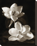 Magnolia II Stretched Canvas Print by Dan Magus