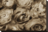 Sepia Roses Stretched Canvas Print by Dan Magus