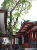 Shrine 4 Photographic Print by Ryuji Adachi
