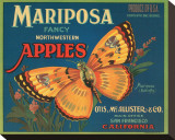 Mariposa Fancy Northwestern Apples Stretched Canvas Print