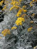 Fortunate Yellow Flower Photographic Print by Ryuji Adachi