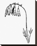 Manypeeplia Upsidownia Reproduction sur toile tendue par Edward Lear
