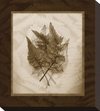 Japanese Painted Fern Study II Sepia Stretched Canvas Print by Melinda Bradshaw