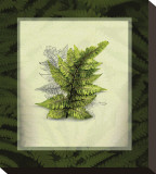 Japanese Painted Fern Study I Stretched Canvas Print by Melinda Bradshaw