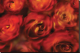 Roses Are Red Stretched Canvas Print by Dan Magus
