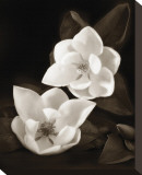 Magnolia I Stretched Canvas Print by Dan Magus