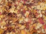 Autumn Photographic Print by Ryuji Adachi