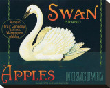 Swan Brand Apples Impressão em tela esticada