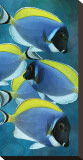 Powder Blue Tang I Stretched Canvas Print by Melinda Bradshaw