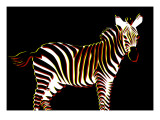 Zebra in Black Horizontal Giclee Print by Ikuko Kowada