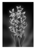 Hyacinth Mono Giclee Print by Ikuko Kowada