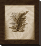 Japanese Painted Fern Study I Sepia Stretched Canvas Print by Melinda Bradshaw