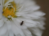 An Ant Takes a Walk Photographic Print by Ryuji Adachi