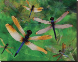 Dragonfly Fantasy Stretched Canvas Print by Melinda Bradshaw