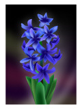 Hyacinth Giclee Print by Ikuko Kowada