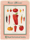 Ernst Benary Pepper Tin Sign by Ernst Snelling