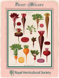 Benary Beetroot Tin Sign by Ernst Snelling