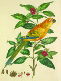Sun Parakeet Tin Sign by John Frederick Miller