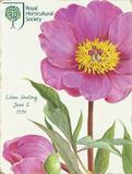 Lillian Snelling Pink Peony Blikkskilt