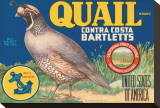 Quail Brand Contra Costa Bartletts Stretched Canvas Print