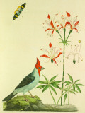 Dominical Cardinal Tin Sign by John Frederick Miller