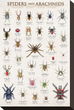Spiders and Arachnids Stretched Canvas Print