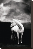 White Horse Stretched Canvas Print