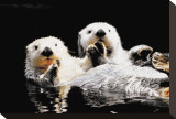 Sea Otters Stretched Canvas Print