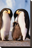 Penguin Family Stretched Canvas Print