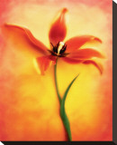 Tulip II Stretched Canvas Print by Christine Zalewski
