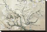 Blühende Mandelbäume, San Remy ca. 1890 (braun) Bedruckte aufgespannte Leinwand von Vincent van Gogh