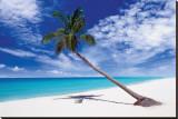 Tropical Leaning Palm Tree Reproduction transférée sur toile
