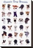 Dog Breeds Stretched Canvas Print by Yoneo Morita