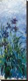 Iris Mauve (detail) Trykk på strukket lerret av Claude Monet