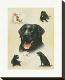 Labrador Stretched Canvas Print by Libero Patrignani