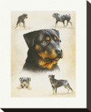 Rottweiler Stretched Canvas Print by Libero Patrignani