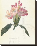Rhodendron Reproduction transf&#233;r&#233;e sur toile par Charles Rennie Mackintosh