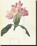 Rhodendron Leinwand von Charles Rennie Mackintosh